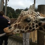 Feeding the giraffe was a highlight for the kids.