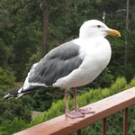 A friendly seagull on the deck