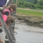 Fishing for crabs on the bridge