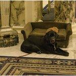 Carley the Canine Mascot
