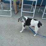 Dog friendly beach bar/grill at hotel