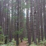 Ausable Trail