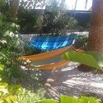 Garden area with hammocks