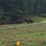 West Virginia State Wildlife Center
