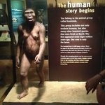 The Field Museum, Chicago, IL - Lucy