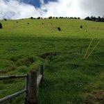 Waimea hill