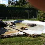New York State Zoo in Thompson Park, Watertown, NY
