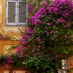Flowers dressing up a house in trastevere
