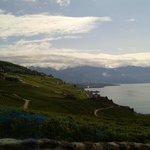vinmarker og genevesøen