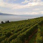 verdens naturarv vinmarker