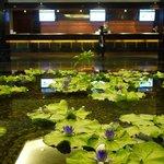 這片蓮花池就在飯店的大廳,不要懷疑都是真的!