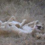 Relaxing roarers