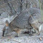 Wildlife at Wilderness Retreat