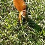 ein Eichhörnchen kommt auf Besuch