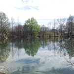 pond in gardens, has lots of turtles