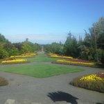 The Axis Garden