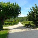 The entrance, through the vineyards