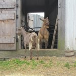 Friendly Farm Animals