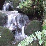 岩をぬって流れるわき水