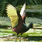 de beaux oiseaux même en ville