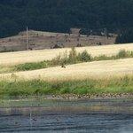 Baskett Slough National Wildlife Refuge