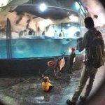 blurry aquarium glass