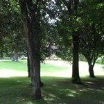 Alberi nel giardino