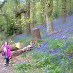 A woodland walk in the spring