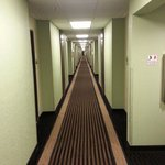 The Shining Hallway
