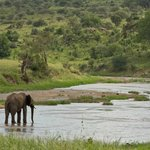 Elephant in the Tarangire River