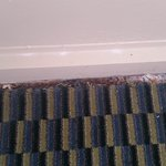 Carpet/Bugs
