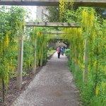 Poison Garden Walk