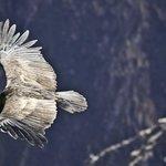 Kuntur Wasi, sobre el profundo cañón del Colca