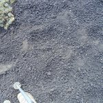 Volcanic Ash you walk on up the mountain!