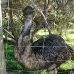 Emu chilling out!