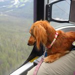 A fellow passnger in our gondola