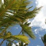 Praia do Hotel Barcelo Bavaro Palace Deluxe. Punta Cana.
