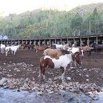 どの馬も美しく手入れされている。