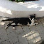 Conchita the newly resident cat