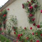 班貝格新宮殿的玫瑰園