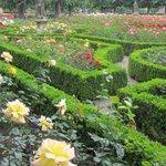 玫瑰園裡花朵競相爭豔