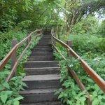 Ellis Wood Nature Trail