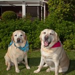The friendly Labs Keesha and Tula