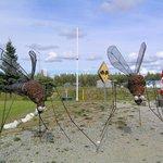 promemoria sugli insetti della zona