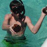 sea urchins found