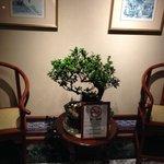 エレベータそばに置かれた盆栽