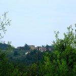 Vineyards of Valpolicella