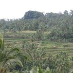 Vlakbij Cleopatra: rijstterassen (op weg naar Mendut)