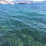 Mado Bodrum'un iskelesinden balıkların görünüşü