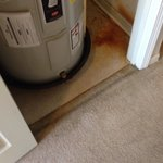 Mold and nasty stain on carpet what a dump